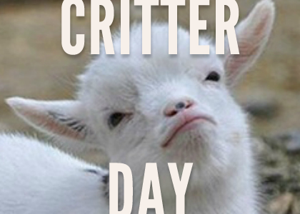 November 6th IS CRITTER DAY