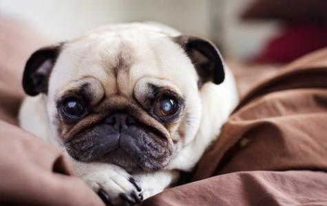 FBI Begins Tracking Animal Abuse