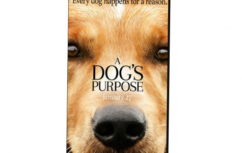 A Dog's Purpose Accused of Animal Abuse