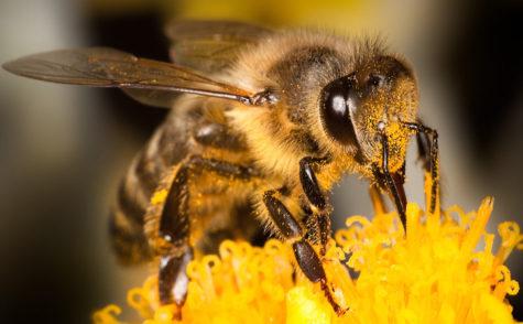 Should we Bee Worried?