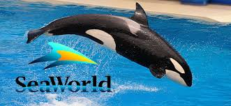 Sea World saves the killer whales (finally)